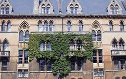 Lierre sur un bâtiment d'université Photographie stock libre de droits