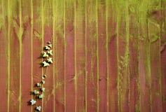 Lierre sur une frontière de sécurité de jardin avec de la mousse verte Photos libres de droits