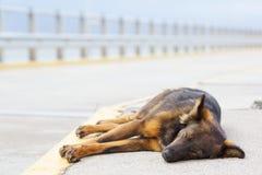 Lies dog Stock Photos