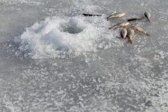 lies för fiskeis bara blockerade vinterzander Arkivbild