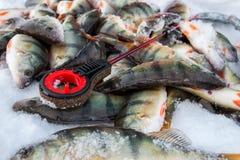 lies för fiskeis bara blockerade vinterzander Arkivbilder
