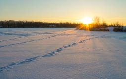 lies för fiskeis bara blockerade vinterzander Gryning i vinter Royaltyfri Foto