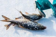 lies russia transbaikalia för fiskfiskeis bara blockerade vinter arkivbild