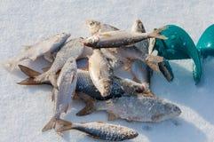 lies russia transbaikalia för fiskfiskeis bara blockerade vinter royaltyfria foton