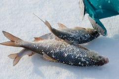 lies russia transbaikalia för fiskfiskeis bara blockerade vinter royaltyfria bilder