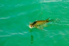 lies russia transbaikalia för fiskfiskeis bara blockerade vinter arkivfoton