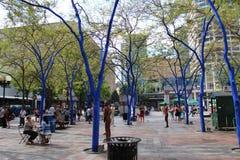 Lieu de rencontre bleu d'arbre photographie stock