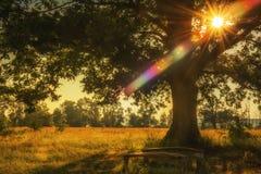 Lieu de repos sous un chêne puissant photo stock