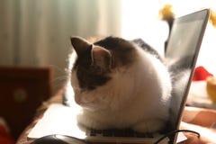 Lieu de travail avec la souris d'ordinateur portable et le chat drôle paresseux s'étendant sur le clavier chaud Images libres de droits
