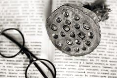 Lieu de travail du livre antique d'Opened de scientifique, verres ronds, fruit de lotus Image libre de droits