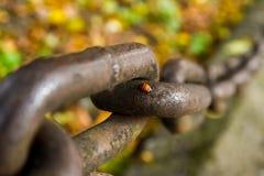 Lieveheersbeestje die op de ketting kruipen Stock Afbeelding