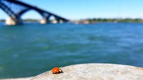 Lieveheersbeestje door Rivier stock footage