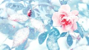 Lieveheersbeestje en mooie roze rozen en blauwe bladeren in sneeuw en vorst in een de winterpark Kerstmis artistiek die beeld in  Stock Afbeeldingen
