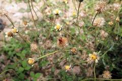 Lieveheersbeestje groen blad op een zonnige dag stock foto's