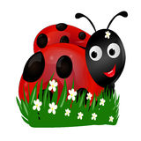Lieveheersbeestje in het groene gras Royalty-vrije Stock Foto
