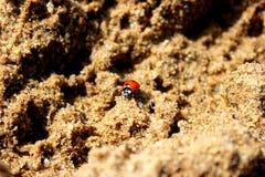 Lieveheersbeestje in het zand Stock Foto's