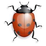Lieveheersbeestje met schaduwen Stock Foto