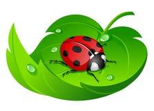 Lieveheersbeestje op blad Stock Foto's
