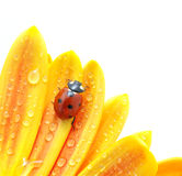 Lieveheersbeestje op bloem royalty-vrije stock afbeeldingen