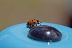 Lieveheersbeestje op de bel van een kind Royalty-vrije Stock Afbeeldingen