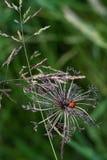 Lieveheersbeestje op dode bloem royalty-vrije stock foto's