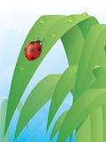 Lieveheersbeestje op een Blad Stock Foto