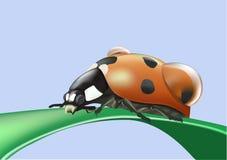Lieveheersbeestje op een blad Stock Foto's