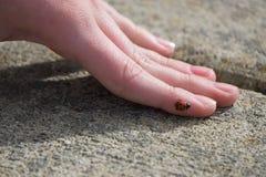 Lieveheersbeestje op een hand Royalty-vrije Stock Foto