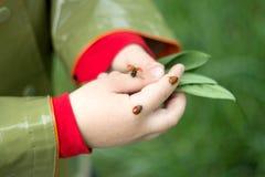Lieveheersbeestje op een palm van kinderen Stock Afbeeldingen