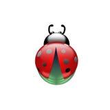 Lieveheersbeestje op een witte achtergrond Stock Foto