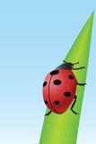 Lieveheersbeestje op gras Royalty-vrije Stock Afbeeldingen