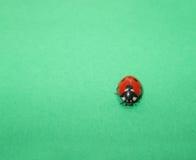 Lieveheersbeestje op groen Royalty-vrije Stock Afbeelding