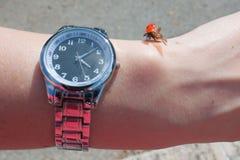 Lieveheersbeestje op hand met een klok in zonnige de zomerdag stock fotografie