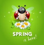 Lieveheersbeestje op madeliefjebloemen royalty-vrije illustratie