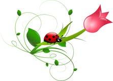 Lieveheersbeestje op tulp vector illustratie