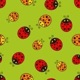 Lieveheersbeestje Vector naadloos patroon Stock Foto's