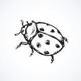 Lieveheersbeestje Vector tekening Stock Afbeeldingen