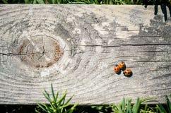 Lieveheersbeestjeachtergrond Royalty-vrije Stock Afbeelding