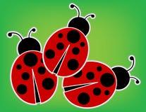 Lieveheersbeestjes Stock Foto's
