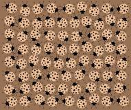 Lieveheersbeestjes Royalty-vrije Stock Foto