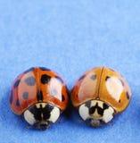 Lieveheersbeestjes royalty-vrije stock afbeelding