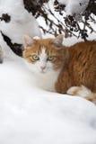 Lievetje le chat de maison image libre de droits