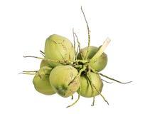 Liez le fruit de noix de coco, d'isolement sur le fond blanc Images libres de droits