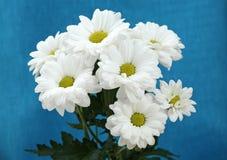 liez les fleurs Image stock