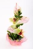 liez les fleurs Photographie stock libre de droits