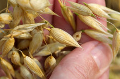 Lif in the hand !. Seeds in the hand Royalty Free Stock Photography