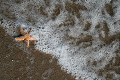 This Is The Life. A starfish being carried by the tide on a tropical beach Stock Image