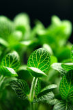 Life. A small green plant close up Stock Image
