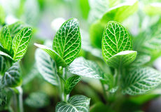 Life. A small green plant close up Stock Images