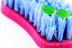 Scrubbing cleaning brush and baby plant Stock Photography